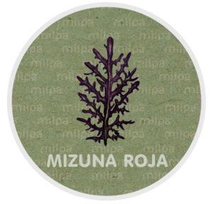 mizuna roja