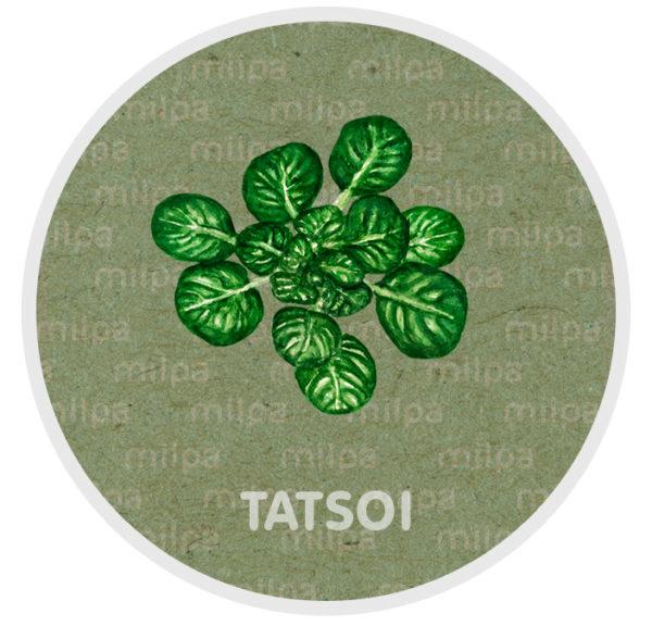 Tatsoi